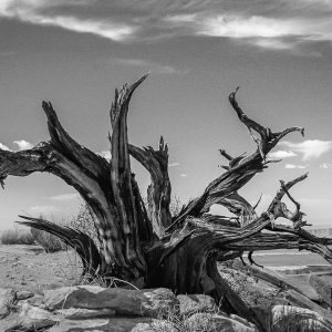 Tree stump in the desert.