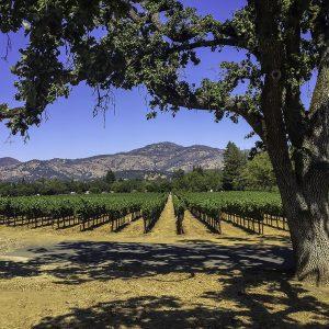 Napa Valley, California.