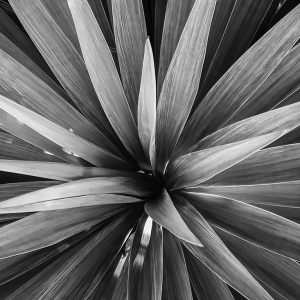 Spiky plant, Washington, D.C.